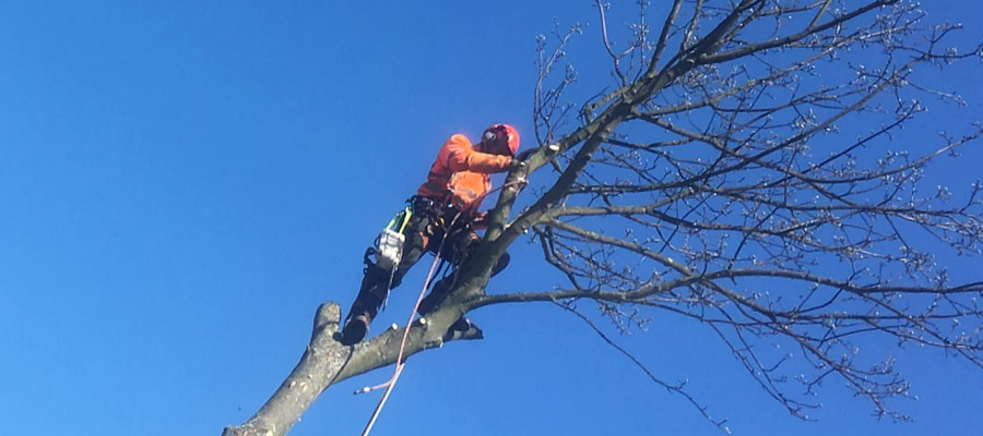 HL Tree Services
